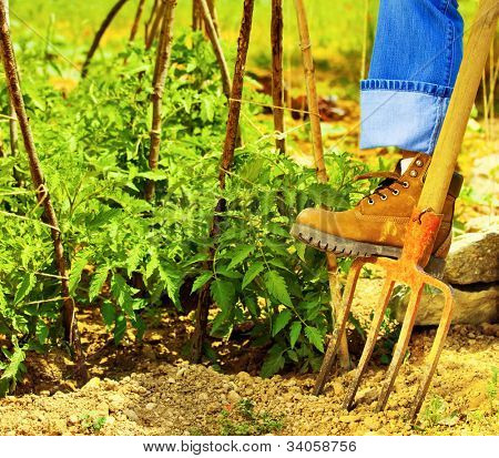 Gardening, gardener's boots over rake, man working hard on the field, digging soil and growing fresh vegetables, healthy organic food, tomato plant, taking care of farm land, harvest season