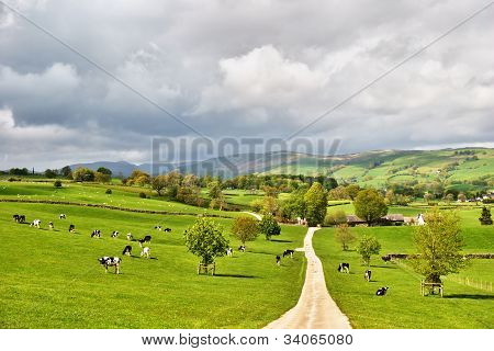 Picturesque English Dairy Farm