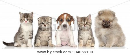 Group Of Kittens And Puppies On A White Background