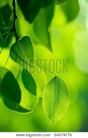 Green foliage in the sun beams