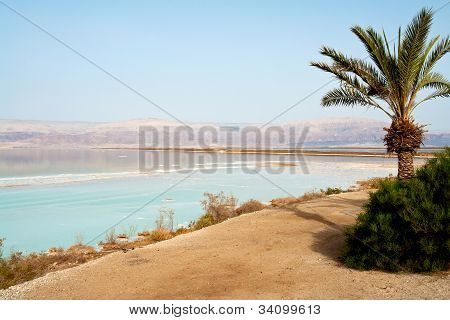 View Of Dead Sea Israel Coastline