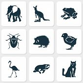 Fauna Icons Set With Seacow, Cat, Flamingo And Other Kitten Elements. Isolated Vector Illustration F poster