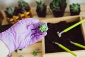 Transplanting A Flower With A Set Of Garden Tools Into A Pot Of Soil. A Purple-gloved Hand Holds A S poster
