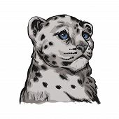 Snow Leopard Baby Tabby Portrait In Close Up Isolated Sketch. Vector Spotted Leopard Hand Drawni Llu poster