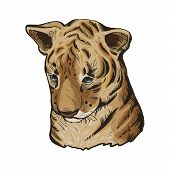 Tiger Baby Tabby Vector Portrait In Closeup Isoated Sketch. Hand Drawn Panthera Tigris, Large Wild C poster