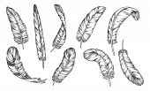 Feathers Sketch Vector Icons Of Different Bird Plumage And Ink Pen Quills. Isolated Hand Drawn Feath poster