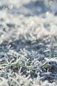 Frost Frost With Ice Crystals On The Grass Green Winter Morning. Close-up, Space For Text. poster