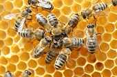 stock photo of beehive  - Bees inside a beehive with some dancing bees - JPG