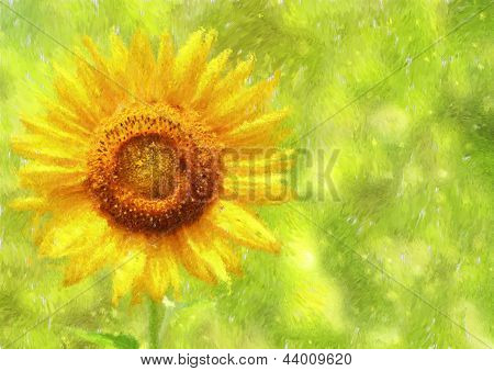 Sunflower / Helianthus