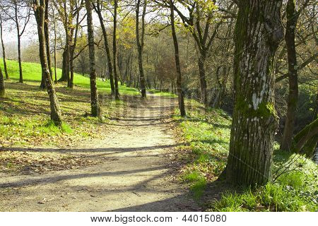 way through the forest surrounded by green trees
