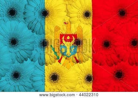 Stylized  National Flag Of Moldova    With Gerbera Flowers