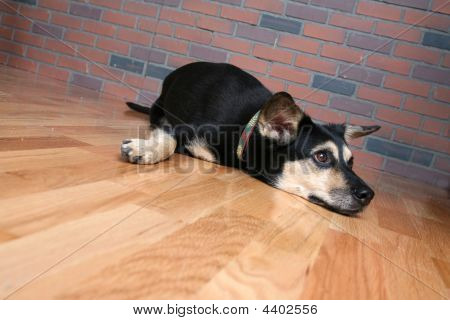 Dog Stretched Out On Floor And Looking Sad