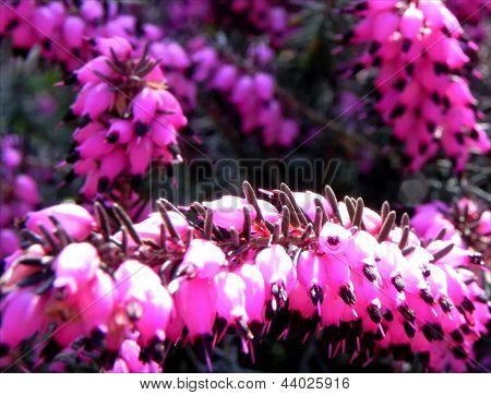 Grub bloem