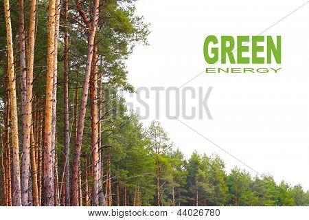 The Pine (Pinus sylvestris) forest with white background. Renewable energy concept. Picture with place for your text.
