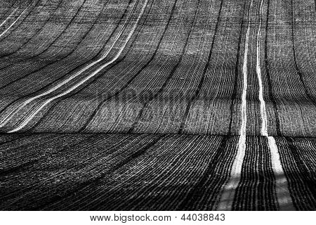 Row In Agriculture Field During Winter