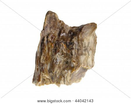 Petrified Wood, Poland