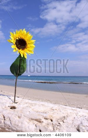 Driftwood Sunflower