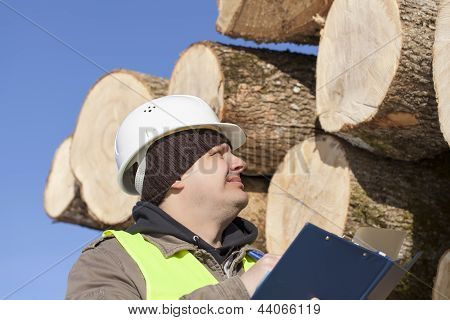 Forester with folder near at the log pile