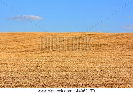 The Field Of Mown Wheat