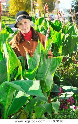 Woman Between Big Leaves