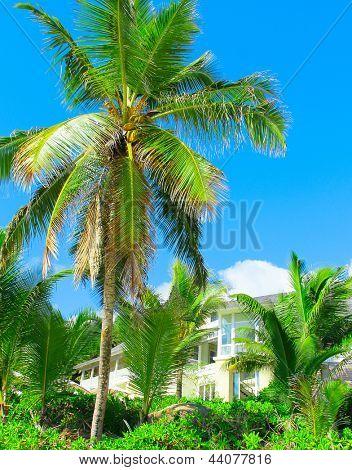 Copse of Trees Sky Paradise