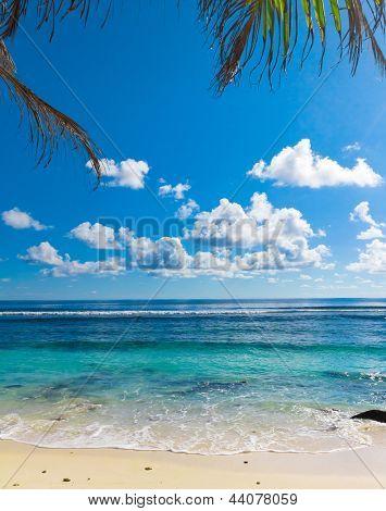 Beach Trees Scene