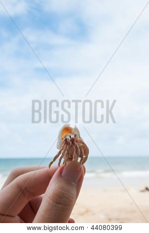 Hermit Crab In Hand On The Beach.