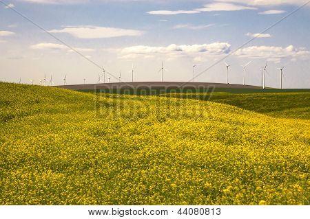 Wind Turbines In A Field Of Yellow Flowers