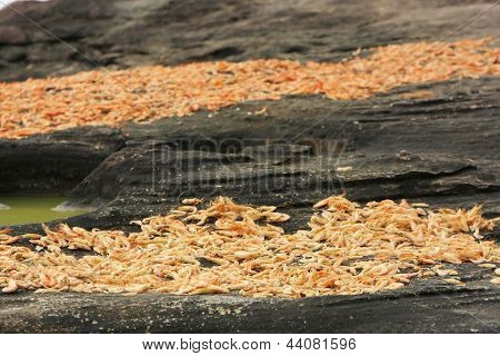 Table With Dried Shrimp In Local Village, Ream National Park, Cambodia