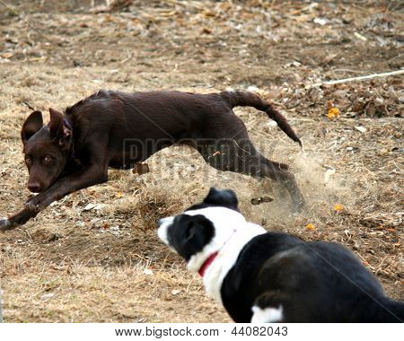 Dogs Racing Through a Leaf Pile