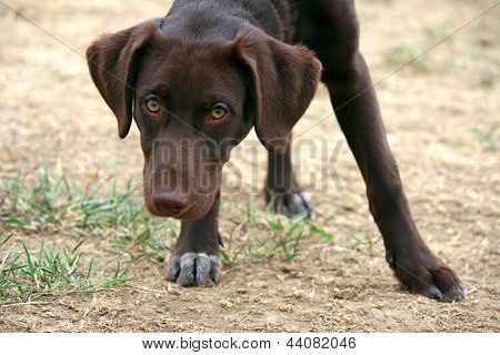 Young dog staring