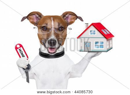 Home Dog Owner