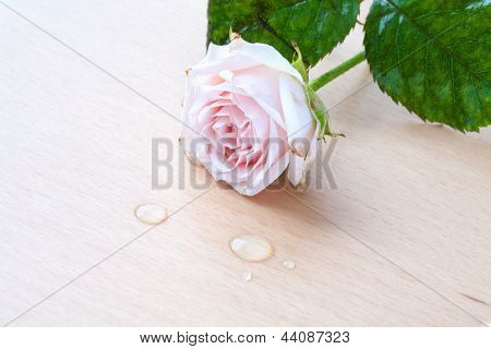 Pink Rose And Water Drops On A Wooden Background