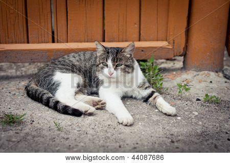 Gato perto da cerca