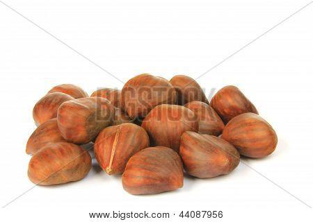 Ripe maroons (Castanea sativa)
