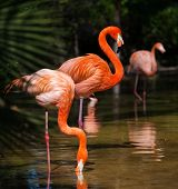 stock photo of pink flamingos  - Group of pink flamingos near water - JPG