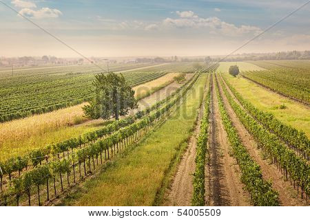 Vineyards landscape in Burgenland, Austria