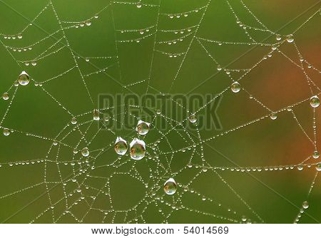 Water Drops On A Spider Web