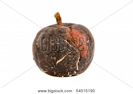 Dark Rotten Apple Fruit Isolated On White