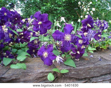 Dark Purple Flower On A Wall