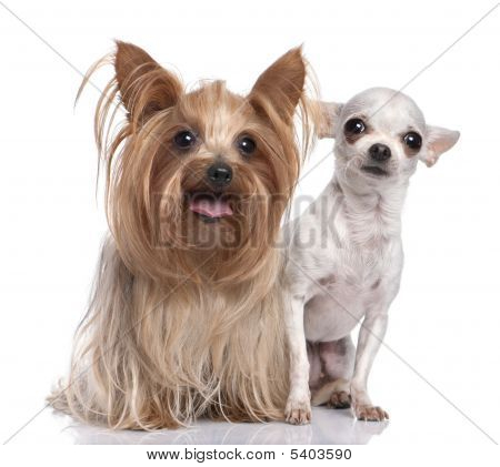 Couple Of Dogs