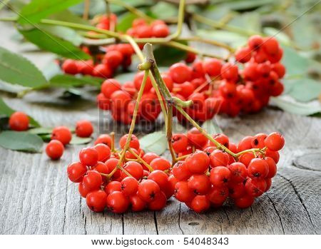 Rowanberry On The Table