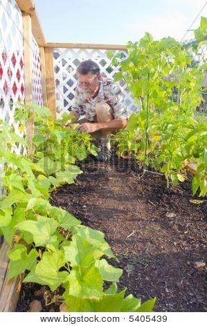 Active Adult Gardening