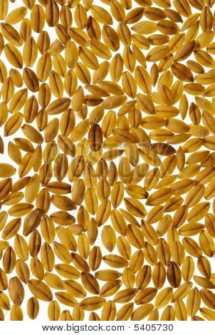 Macro View Of Barley Grain For Background, Texture
