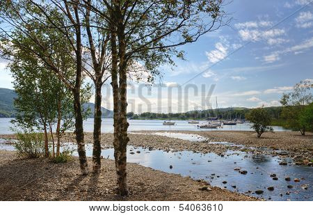 Silver Birches on the shore of Coniston Water