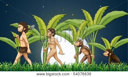 Illustration of the evolution of man