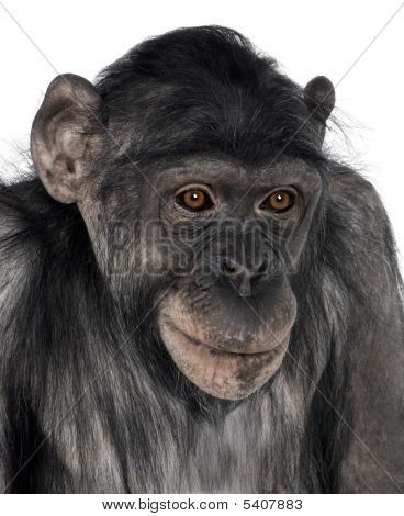 Close-up On A Monkey's Head