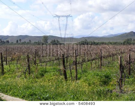 Pylons In The Vines