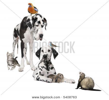 Grupo de animales domésticos: Perro, aves, conejo, gato y Ferret
