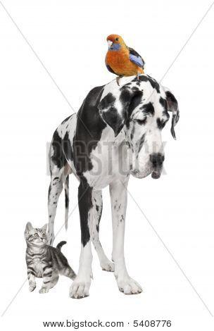 Group Of Pets : Dog, Bird, Cat